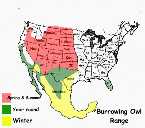 Burrowing owl habitat map - photo#4