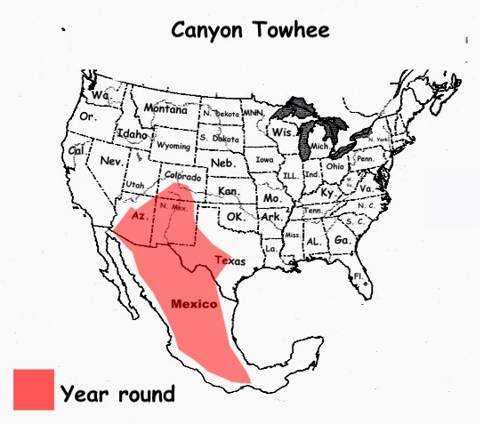 Photographs Of Canyon Towhee And The Other Birds On The