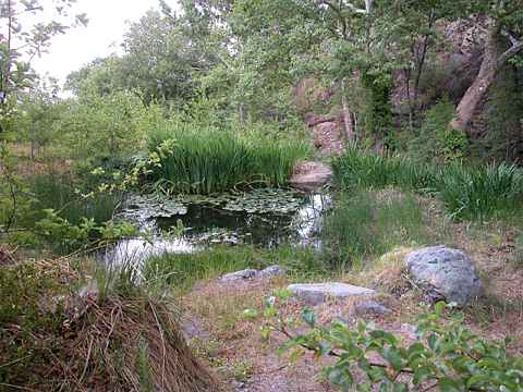 Photographs of tom beatty 39 s miller canyon b b and the for Small frog pond ideas
